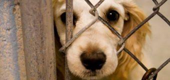 Προστασία των ζώων